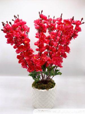 شکوفه سیب نزدیک گل کالا