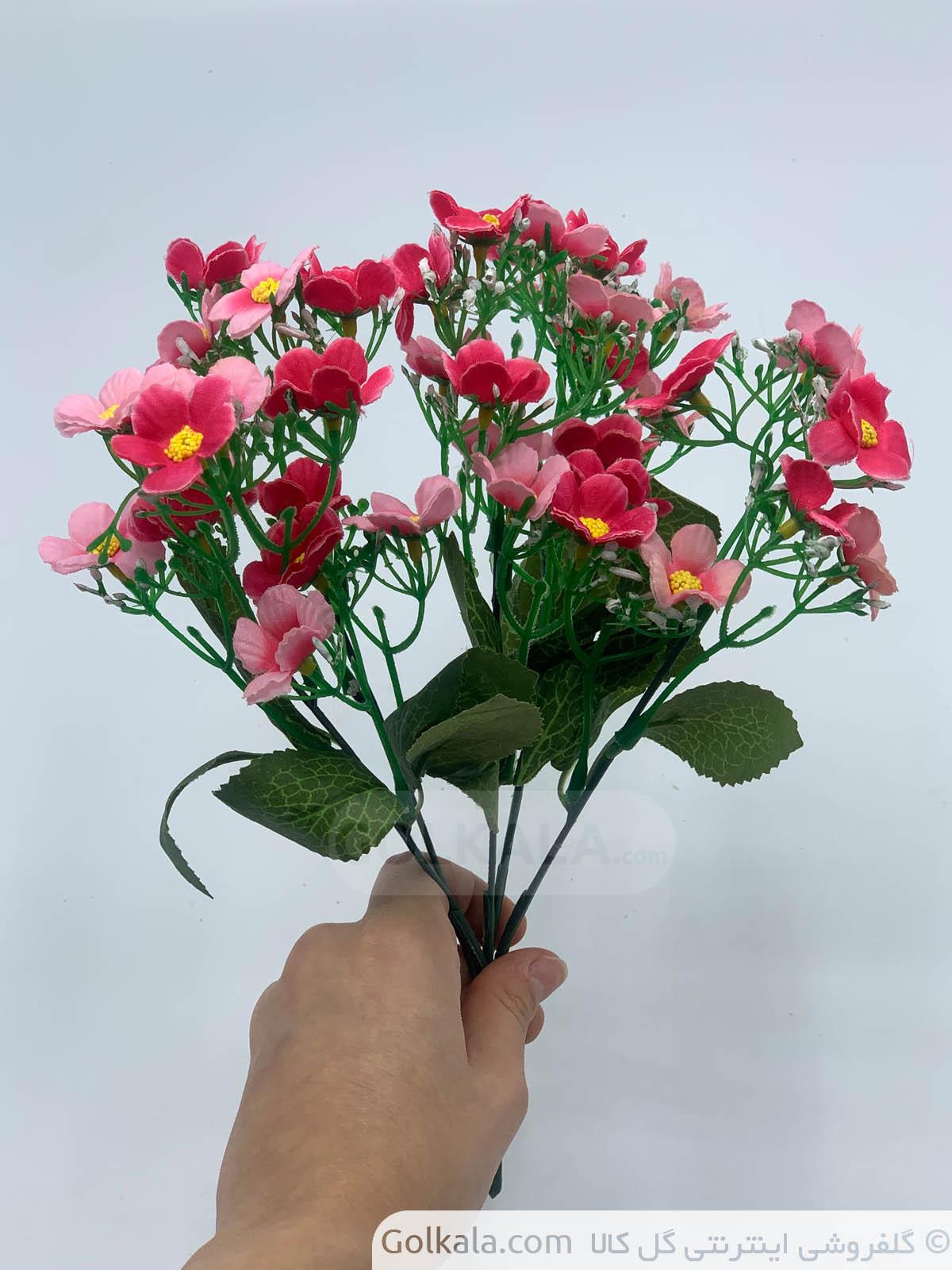 گل بهاره صورتی گلبهی گل کالا